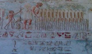 فلاح مصري ومعه ابنه الصغير وهما يهتمان بزرع المشروم
