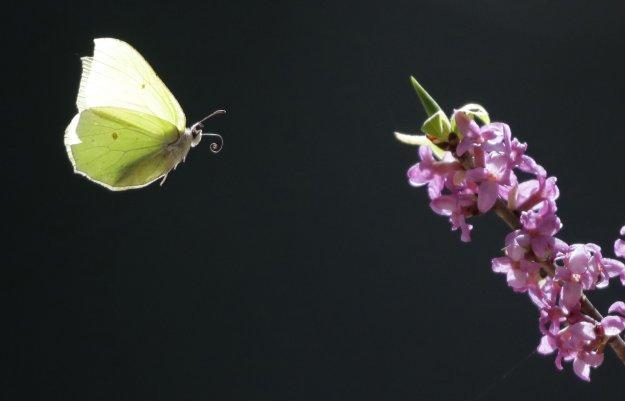 Το πέταγμα της πεταλούδας στη Ζούγκλα της Μέσης Ανατολής