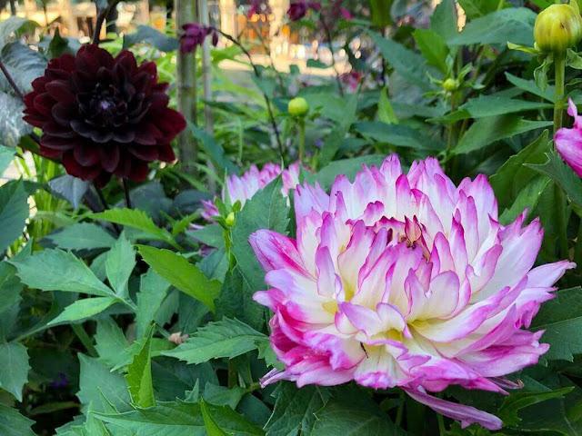 Flores de Helsinquia - Finlândia