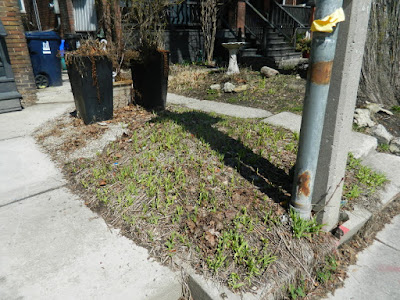 Parkdale Toronto front garden spring clean up before by Paul Jung Gardening Services