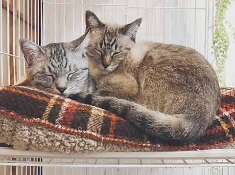 仲良くくっついている猫たちその1