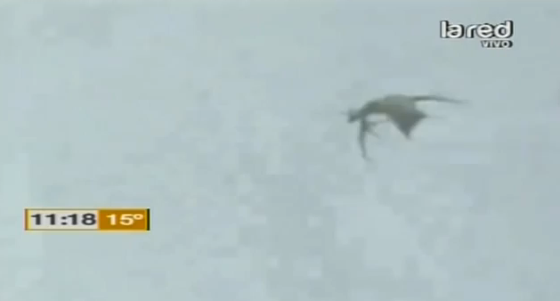 Uncanny Winged Creature Flying Over Chile Captured On Video