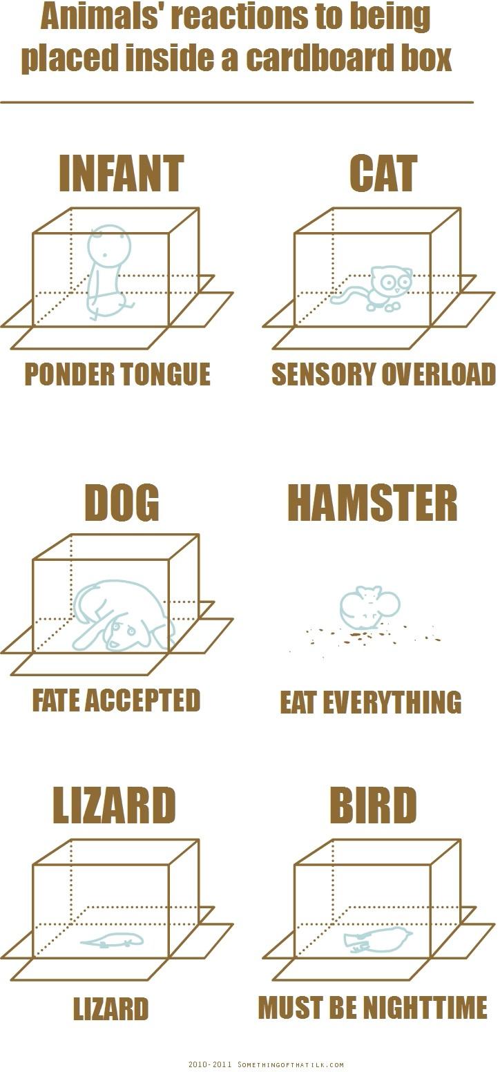 Animales debajo caja
