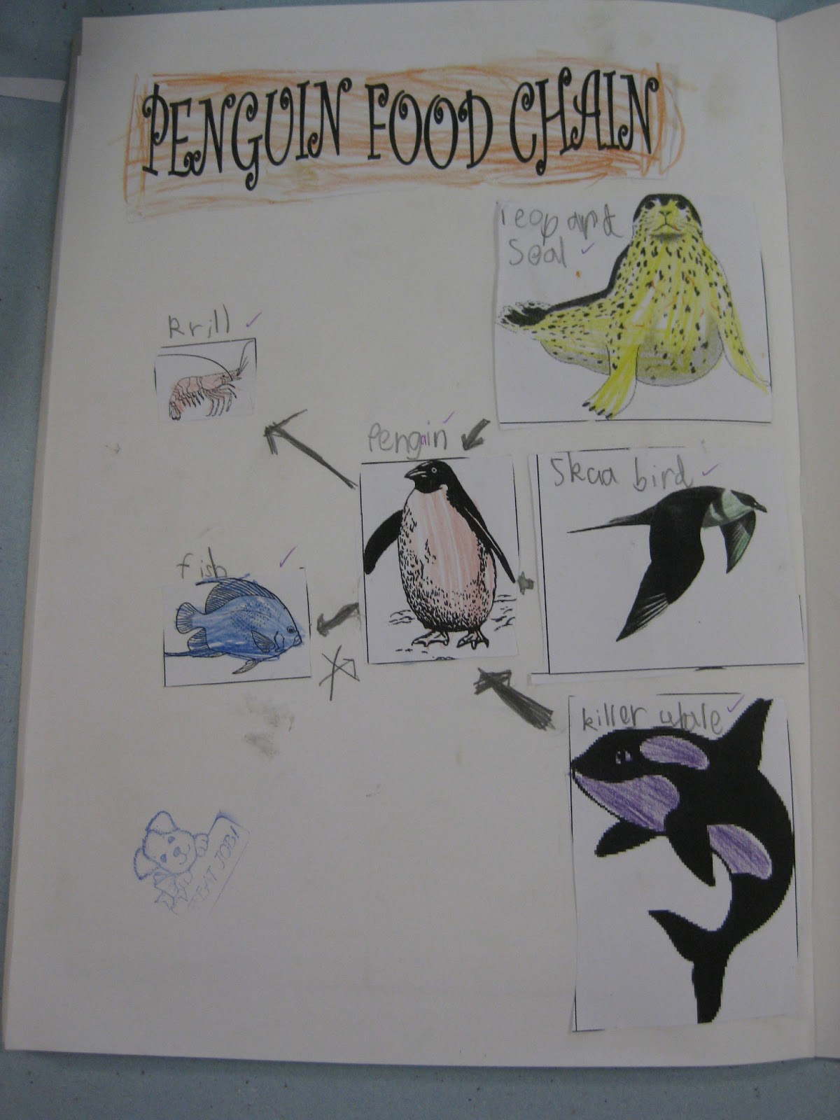 emperor penguin food chain - photo #14