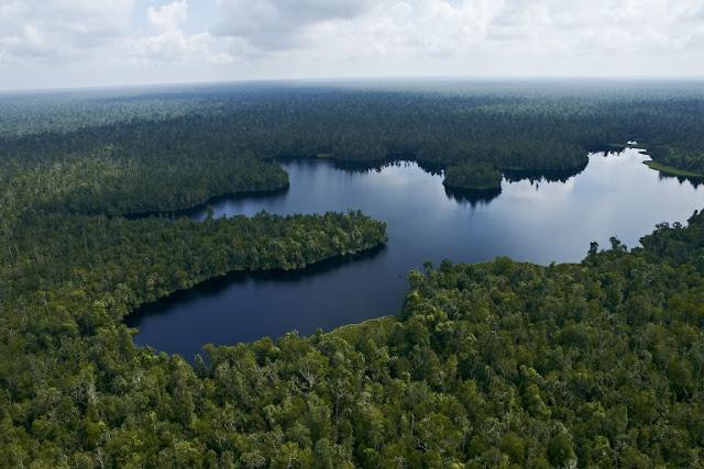 Pendekatan Bentang Alam Dilakukan APRIL Pulp Untuk Melindungi Hutan Gambut