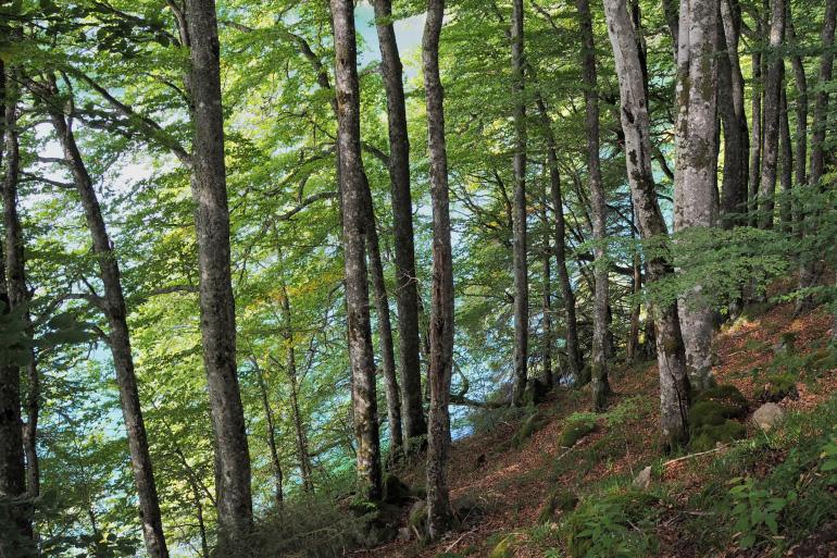 Promenade autour du lac Pavin dans le massif du Sancy