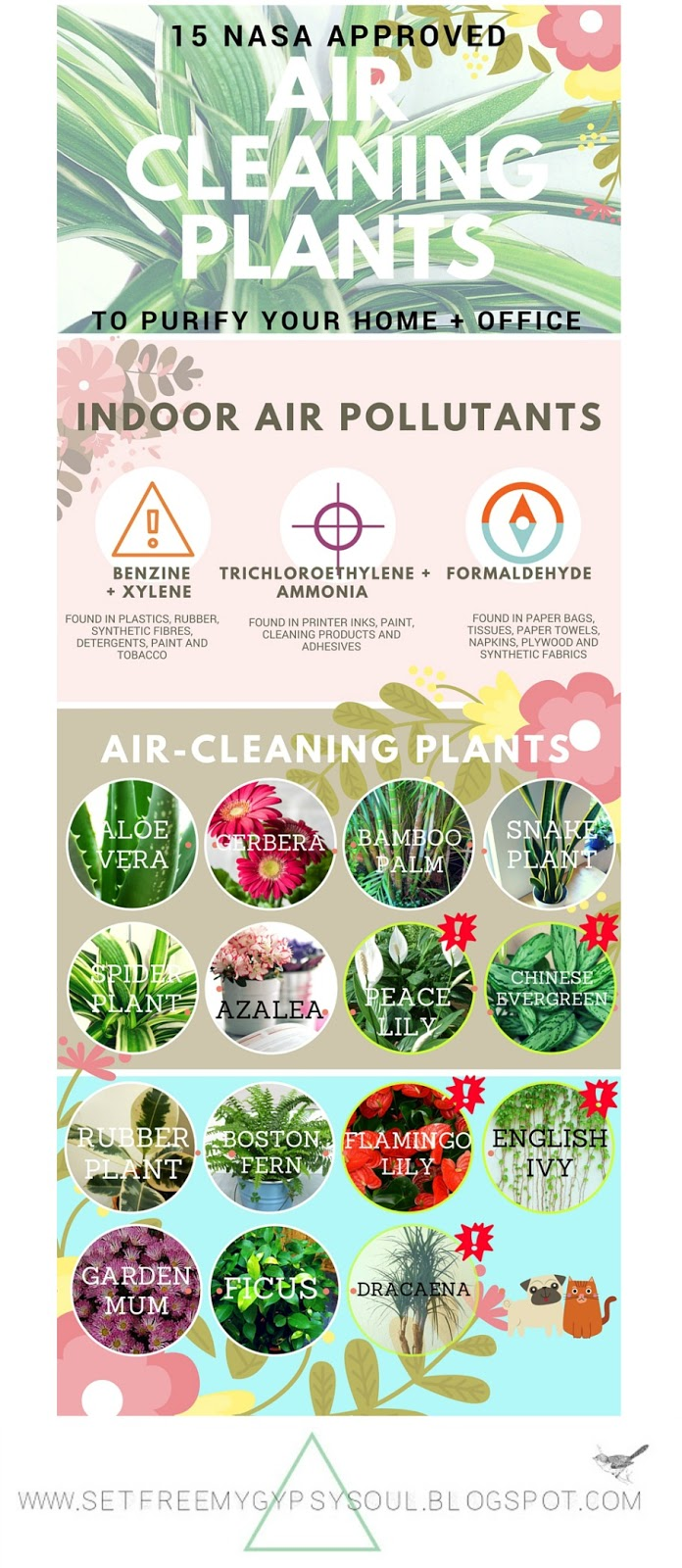 air purifying air cleaning houseplants clean living plants
