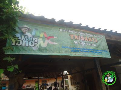 Alamat MANGYONOcom