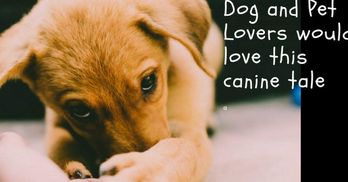 For Pet Lovers and Dog Lovers