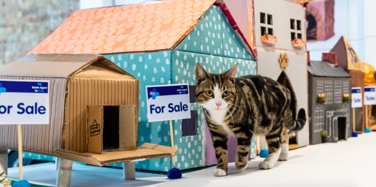 World's first ever estate agent for cats