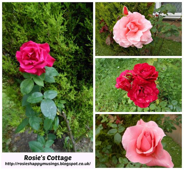 Roses to make you smile honeys x