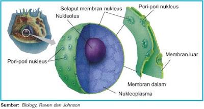 Contoh 1, Gambar Struktur dan Bagian Inti Sel
