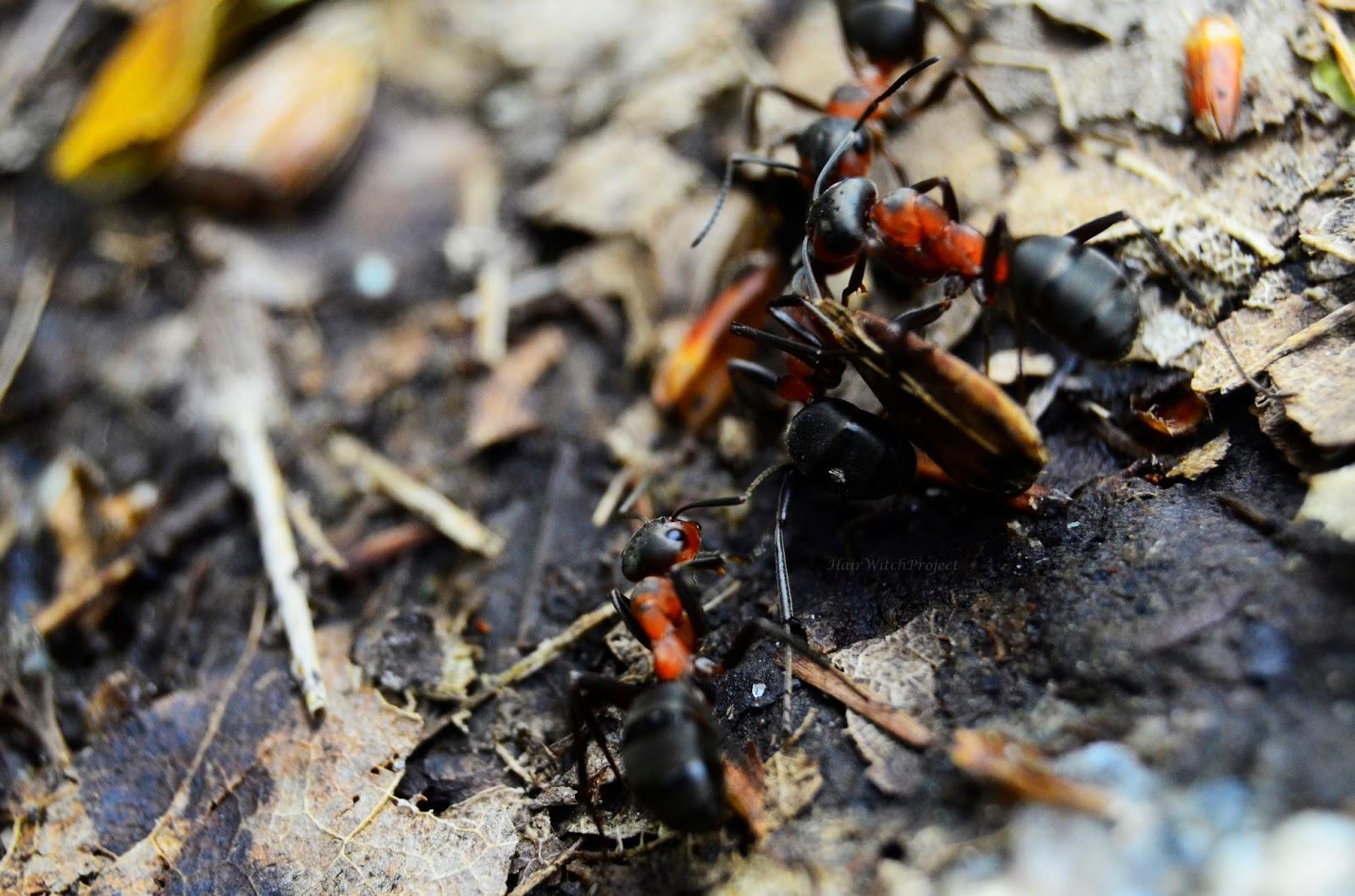 fotogafia | wiosna | makro | mrówki