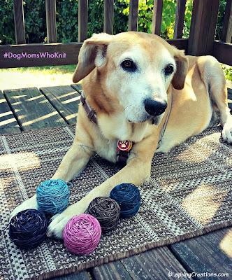 senior hound dog with yarn