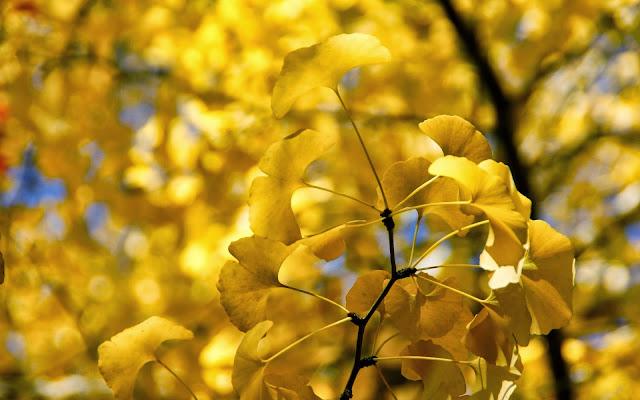Foto met gele herfstbladeren aan een boom