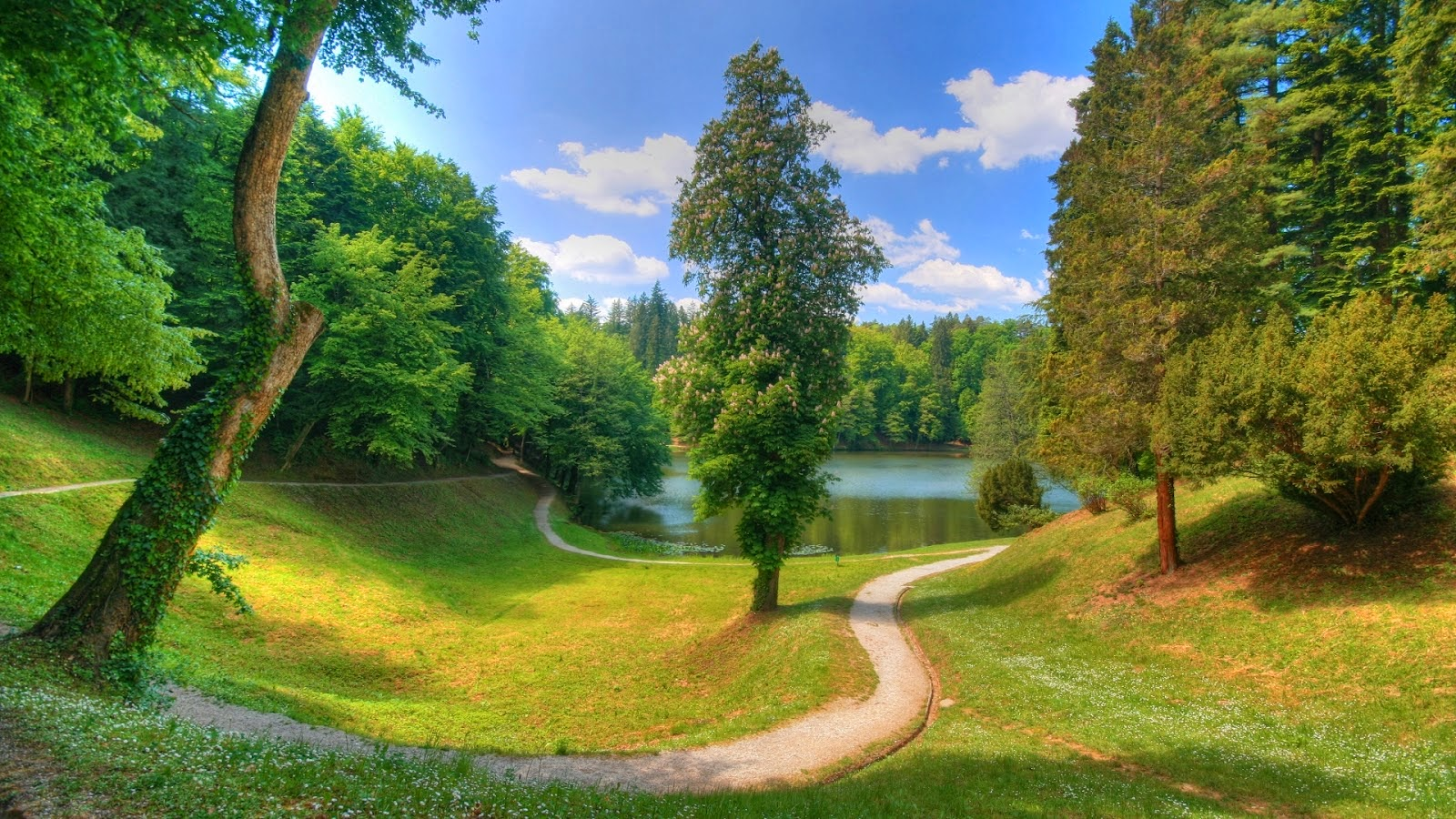 Beautiful trees Wallpapers New Green Trees