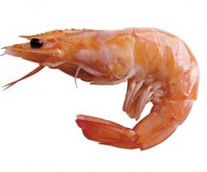 Health Benefits of Shrimps