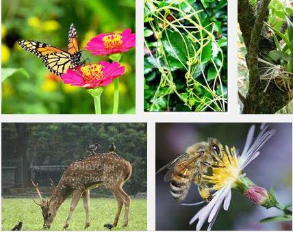 Pengertian dan Macam-macam Contoh Simbiosi Mutualisme, Komensalisme dan Parasitisme sebagai Bentuk Pola Interaksi dalam Ekosistem