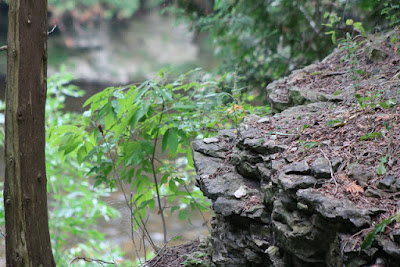 Camping at the Elora Gorge Conservation Park and walking through the magic that it holds.