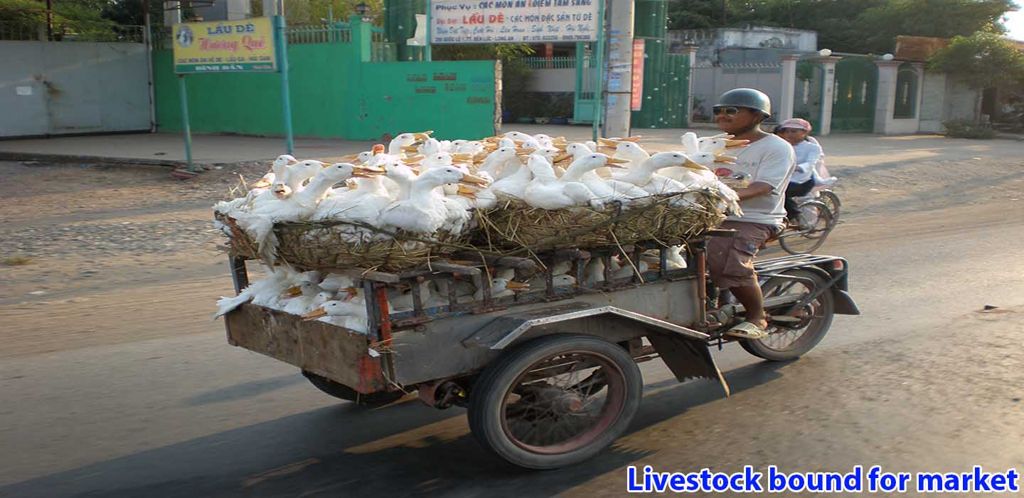 real-mekong-delta-tour-Rice-Husk-transport-on-boat-1