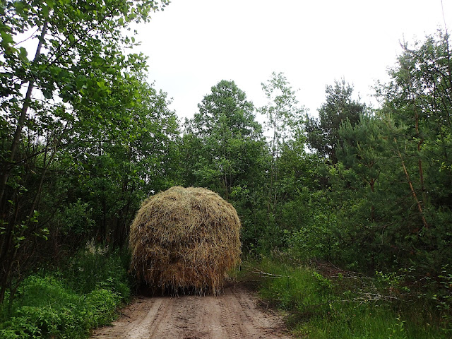 Ukraińsko-poleskie klimaty: fura, las i leśna droga