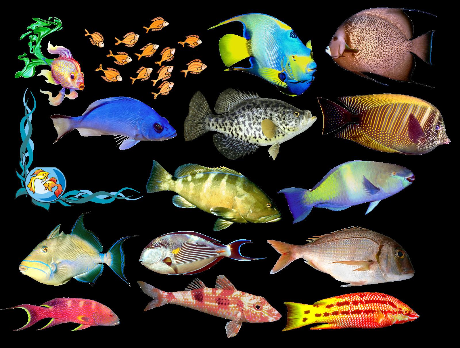 Цветные картинки рыбы распечатать