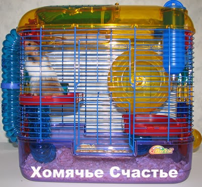 Syrian hamster, hamster Care and Maintenance 2014 part 1