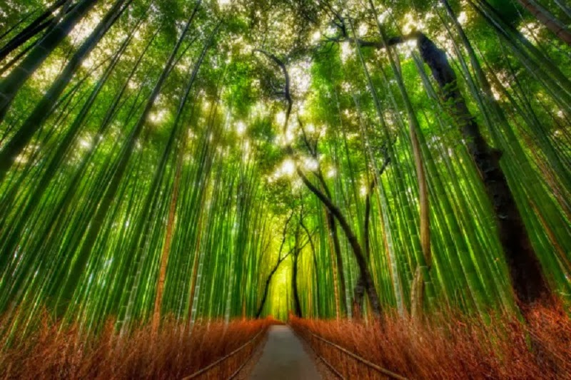8. Bamboo forest, Kyoto, Japan - Top Fairy Tale Places You Must See