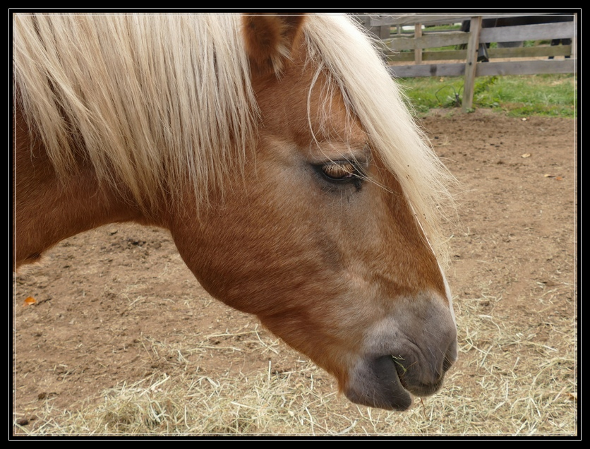 Rescued Horse at Little Brook Farm