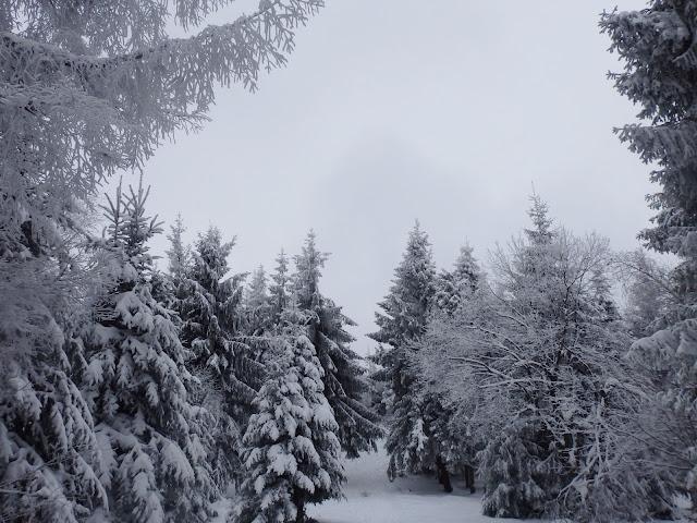 Szczyt Śnieżnicy (1006 m.n.p.m), listopad 2016.