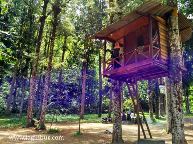 Hutan Pinus Ledok Ombo Camping Ground Poncokusumo Malang