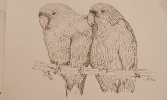 Pencil sketch of lovebirds