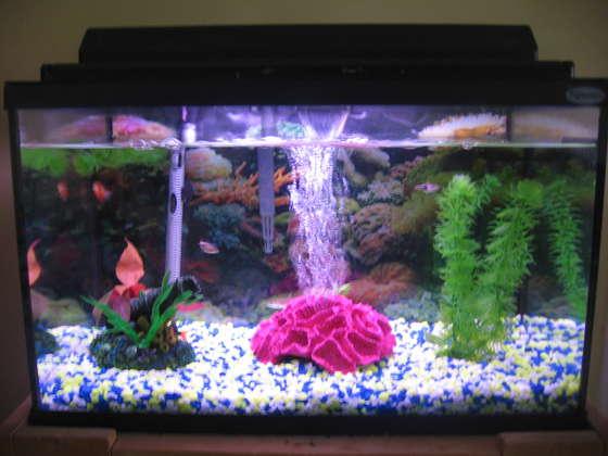 Fish Tank The Animal Life