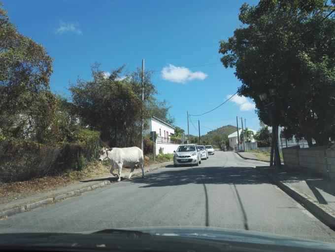 Liikenne St Maartenilla / Saint Martinilla SXM