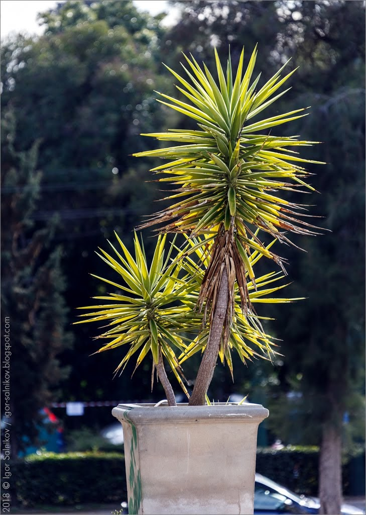 Греция Афины Национальный сад парк Заппейон