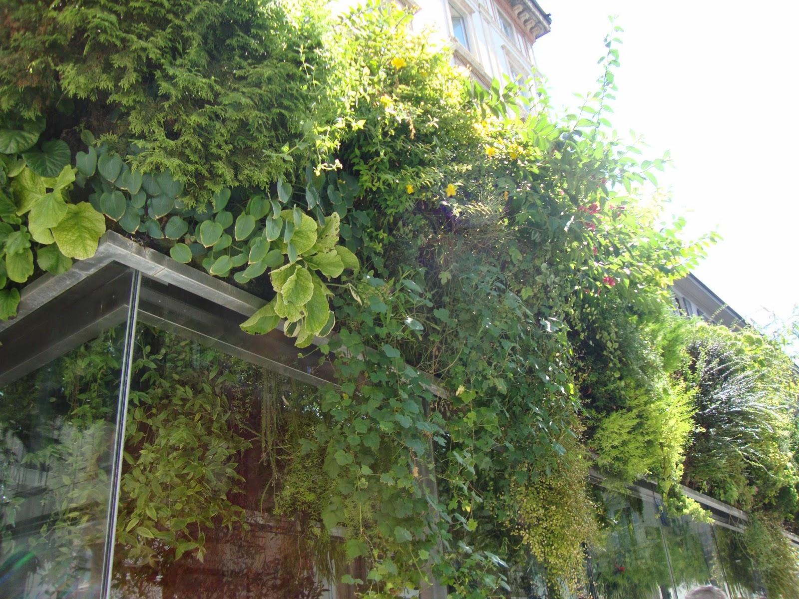 A milano si pu ammirare uno dei pochi muri vegetali for Giardini verticali milano