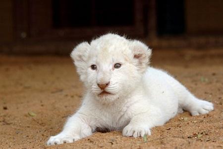 Dünyanın En Pahalı 6 Hayvanı