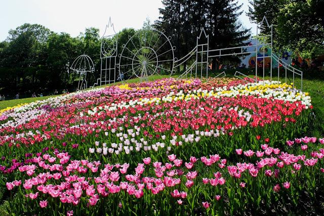 Тюльпаны в честь Лондона (Шевченковский район)