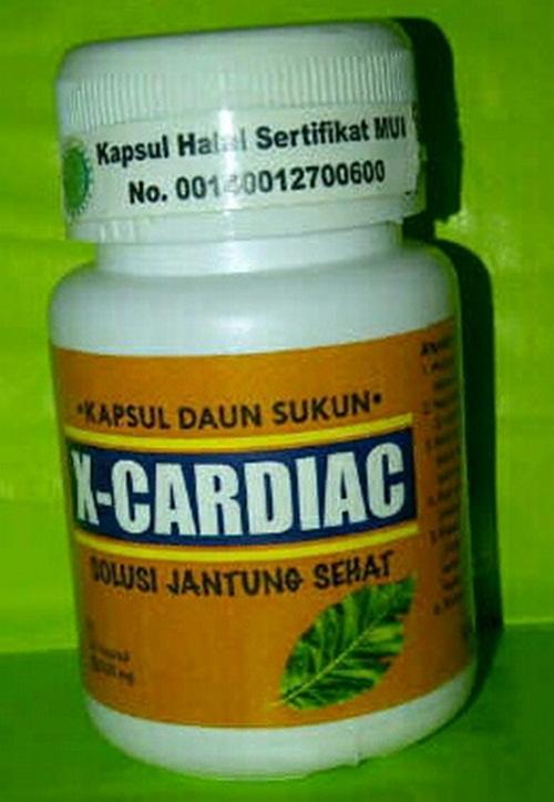 kurotsuki manfaat daun sukun untuk obat penyakit kronis