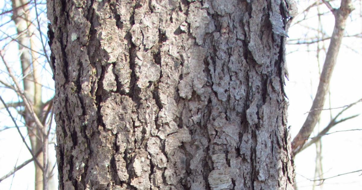 Survey Of The Land Hardwood Tree Identification