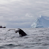 Japão lança nova campanha anual de caça às baleias