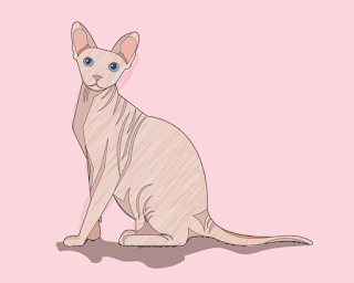 HOW-TO-DRAW-A-SPHYNXCAT