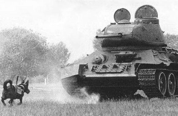 Anjing anti tank