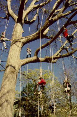 Anki On The Move: Tree Climbing India,Tree Climbers International