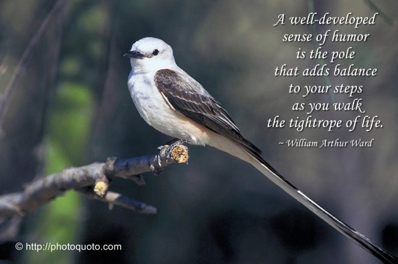 Funny Pictures Gallery Bird Quotes Sayings Bird Quotes And Sayings