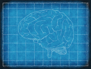 Two articles linked provide further information that the human brain was designed not evolved.