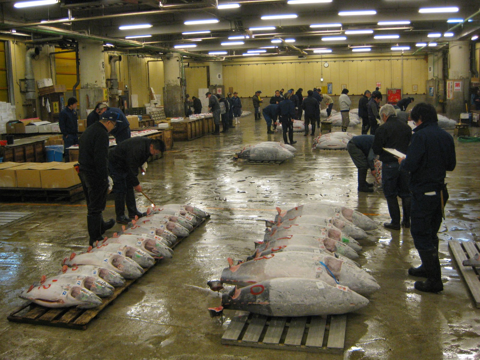 Tokyo - Auction houses mark and estimate the value of each fish