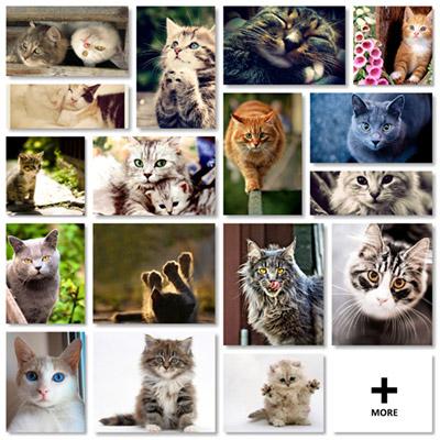 Cute Cats Kittens Pet - Thumbnails