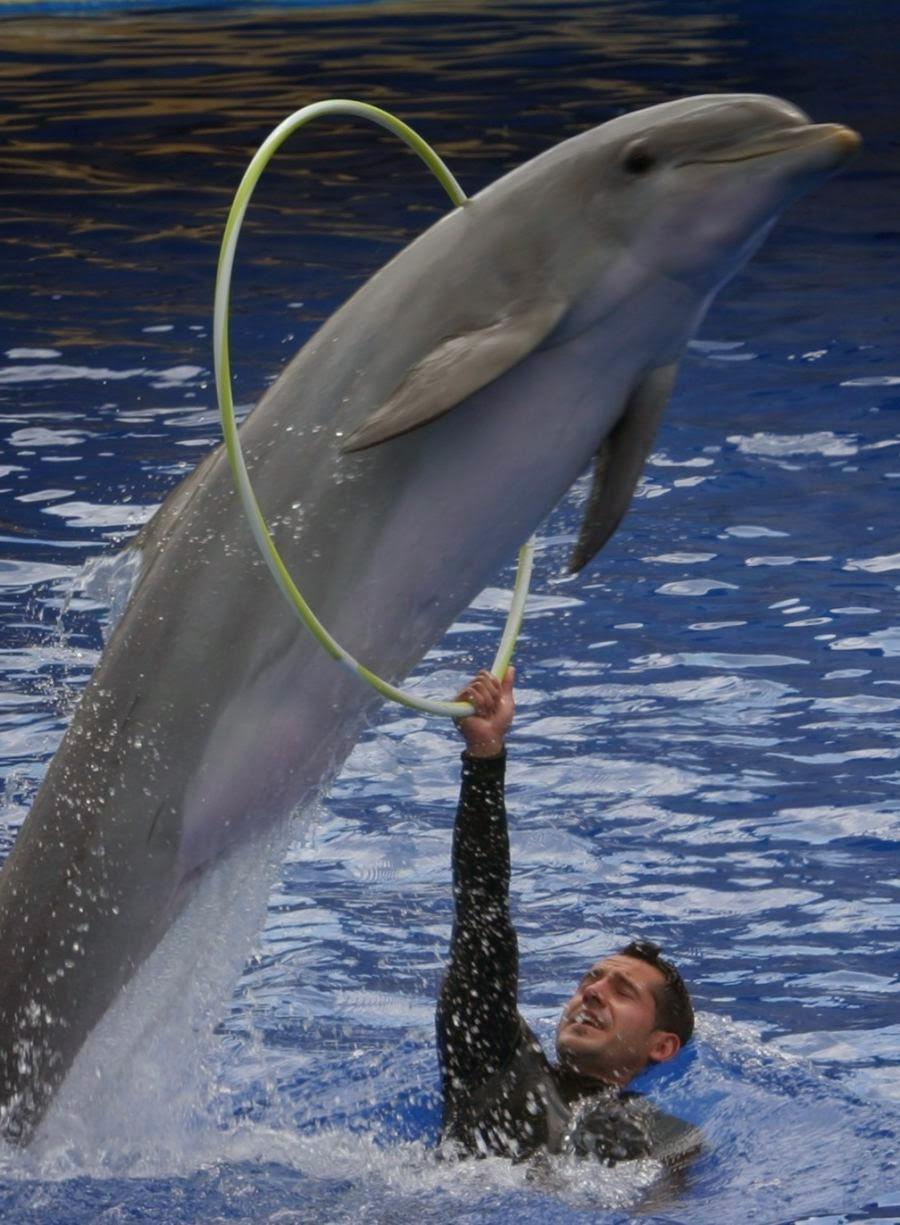 Imagenes de delfines espectaculo
