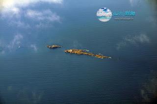 رفراف الشاطئ بنزرت : الجزيرة  القاني